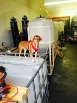 biodiesel doggie